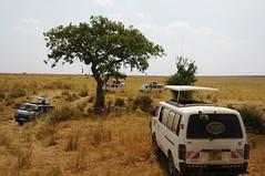 Kenya-Masai Mara (Magdeburg) Tags: holiday kenya mara kenia masai masaimara kenyaholiday