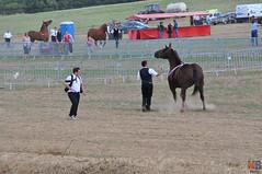 DSC_0246 (- MB Photo -) Tags: de cheval des 09 labour concours 07 vache tracteur vaches chevaux bourg comice agricole comptes 2013 bourgdescomptes  labourer