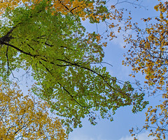 Autumn Park. Yellow and Green (elluckyphoto) Tags: park street city autumn sky plants tree green nature colors leaves yellow october colorful branch outdoor ukraine kharkiv