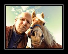 Daar zijn ze weer :-) (gill4kleuren - 11 ml views) Tags: horse sarah fun saar paard haflinger