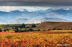 Autumn in La Rioja 18 (ignacio izquierdo) Tags: autumn paisajes landscape la vineyard vineyards otoo rioja larioja viedo viedos
