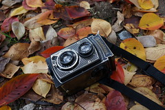 Rolleicord on Autumn Leaves (Purple Field) Tags: autumn art leaves japan digital zeiss 35mm gold kyoto sony full carl frame 京都 日本 紅葉 秋 deco rolleicord sonnar f20 落ち葉 アールデコ i ソニー ゾナー ローライコード 金ピカコード カール・ツァイス フルサイズ dscrx1