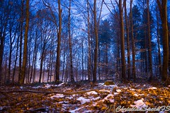 Night forest peace (christian speck) Tags: trees snow night forest 35mm outdoors schweiz switzerland suisse sony lausanne arbres neige nuit foret vaud sauvabelin rx1