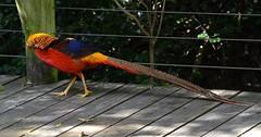 Birds of Eden, South Africa (sroy_sroy) Tags: birds southafrica colorful exotic aviary sa plettenbergbay birdsofeden