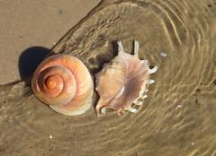 Shells (jenni747) Tags: shells beach water sand australia ripples bej anawesomeshot