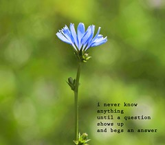 Image Poetry (Don Iannone) Tags: summer flower imagepoetry poemandpicture
