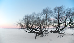 Cold Guardian (giantmike) Tags: morning sky lake cold tree nature sunrise dawn frozen wind freezing madison mendota wi canonef24105mmf4lis