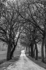 Viale nebbia23-010214 (PGB71) Tags: alberi campagna erba camerino sole nebbia albero rugiada marche rami filo prati spinato pascolo