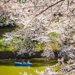 Welcome Spring / Tokyo, Japan (yameme) Tags: travel flowers nature japan canon eos tokyo  sakura cherryblossoms     chidorigafuchi   24105mmlis 5dmarkii 5d2