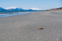 Shell 4 (afloden) Tags: shells beach norway strand view no horizon utsikt troms horisont lyngen skjell