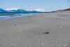 Shell 4 (afloden) Tags: shells beach norway strand view no horizon utsikt troms horisont lyngen skjell