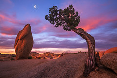 The Head and the Heart (Michael Bollino) Tags: california camping sky color nature rock clouds sunrise landscape outside nationalpark desert joshuatreenationalpark