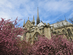 Notra Dame int the Spring (rivadock4) Tags: paris d dame rue notradame ruedarcole notra arcole