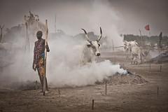 Mundari cattle camp (tommcshanephotography) Tags: africa travel island war cattle cows southsudan tribe wtn crises juba rivernile cattlecamp mundari terekeka tommcshanephotography levwood levisonwood walkthenile
