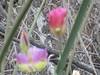 CIMG6437 (kazadmanesh) Tags: و بهار خشکسالی