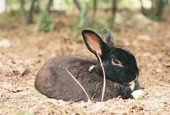 Rabbit (yuseonk) Tags: