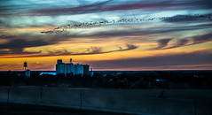 And the sun sets on the tiny town I call home... (nwitthuhn) Tags: kansas bazine sunset grain elevator water tower geese