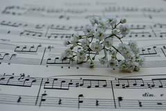 Play that Song (daisyglade) Tags: playthatsong train sheetmusic gypsophila flower delicate music