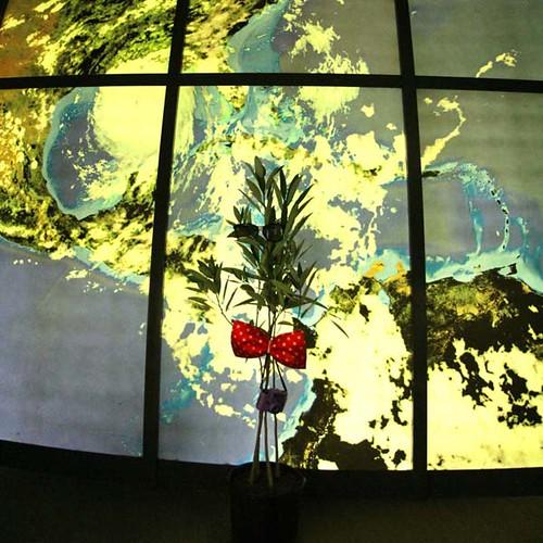 TREE-25188 tree giveaway world_crop