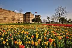 Yedikule Soanl Bitkiler Park (NATIONAL SUGRAPHIC) Tags: flowers spring tulips istanbul iekler zeytinburnu ilkbahar yedikule laleler sugraphic tulipsofturkei