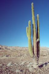 Cactus (WideAngleWandering) Tags: mexico bajacalifornia gonzagabay nex5 sonynex5