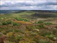 Heath re-creation (ExeDave) Tags: uk england landscape geotagged stand nationalpark derbyshire peakdistrict acid july heath gb restoration bracken recreation grassland habitat moorland heathland abney upland 2011 abneymoor bestpracticeburninggroup geo:lat=5331752472640075 geo:lon=17274606227874756 p7071160