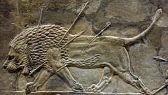 Lion Hunts of Ashurbanipal, dying male lion (close) (profzucker) Tags: sculpture london art ancient iraq lion palace relief beginning britishmuseum gypsum tigris mosul hunt assyrian excavated ashurbanipal neoassyrian ninevah rassam 645bce