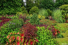 543) Kennett Square PA, Longwood Gardens - scene along Flower Garden Walk [409] (Houckster) Tags: flowers usa garden pennsylvania sony pa botanicalgarden longwoodgardens photostream 409 kennettsquare 2013 19348 houckster slta77v sony182503563