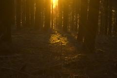 Aufziehender Nebel im Wald (Basinbah) Tags: autumn light fall leaves leaf gloomy laub herbst ambient welk