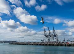 Auckland (fabvirge) Tags: animal port rouge auckland ciel nuage oiseau couleur grue mouette nouvellezélande