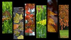 """A/U/T/U/M/N"" (Petra U.) Tags: autumn red orange green leaves yellow collage herbst autumncolors badenbaden herbstlaub herbstfarben flickrchallengegroup flickrchallengewinner"