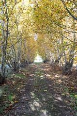 Hay luz al final del tunel ? (Luis_G.) Tags: luz hojas arboles valladolid otoo tunel