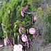 Trees_of_Loop_360_2013_071