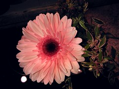 pink flower nokia flora nightshot flash indoor smartphone... (Photo: eagle1effi on Flickr)