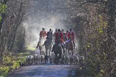 BOXING DAY HUNT (mark_rutley) Tags: horses dogs sport countryside hunting boxingday hampshire equestrian hunt foxhunting hounds countrylife winchesterhill boxingdayhunt