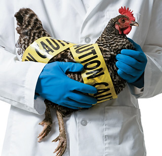 H7N9:已突变,有风险