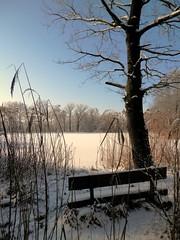 Eisiges Pltzchen (KICHINICHI) Tags: winter tree oak frosty eis bume baum eiche eichen