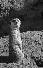 Zoo Life. An animal portrait (Khoa D.D) Tags: life animal lens zoo 35mmfilm nikonf3hp captivity f35 200mm blackandwhitefilm