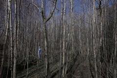 You can't see the pyjamas for the trees (Alex Bamford) Tags: trees night woods brighton moonlight stamnerpark sleepwalk alexbamford wwwalexbamfordcom alexbamfordcom