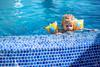 OF-Ensaio-2anosMariaClara-332 (Objetivo Fotografia) Tags: sol água piscina infantil cachorro verão livro cama menina dormir pai bóia mãe banheiro banho pais almoço brincadeira calor mariaclara mamadeira leitura escondeesconde penico umdia manfroi felipemanfroi eduardostoll dudustoll ensaioinfantil estúdioobjetivo objetivofotografia acompanhamentode1dia