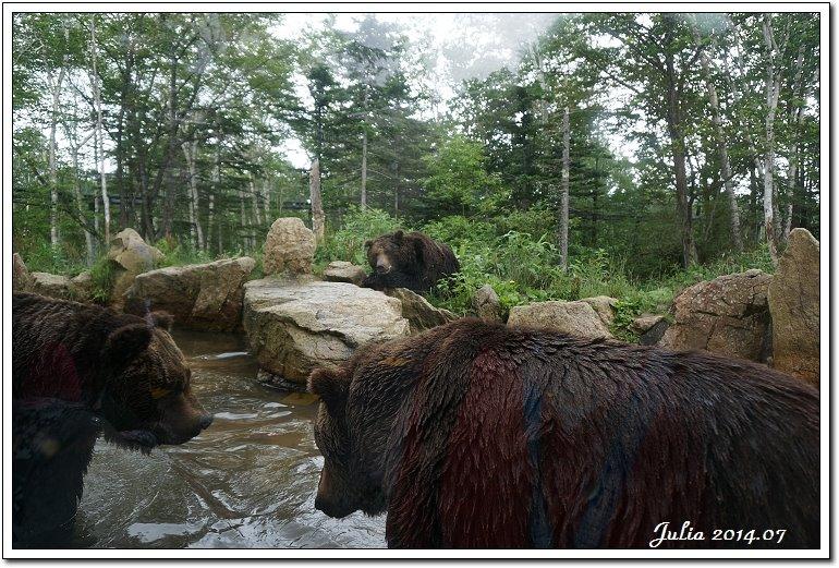 熊牧場 (13)