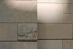 Buffalo (Mamluke) Tags: 1920s sculpture brown sunlight lines minnesota rock stone wall carved buffalo beige pierre tan skulptur carving rochester escultura braun pietra stein brun bruin steen piedra 1927 scultura beeldhouwwerk plummerbuilding plummer marrn rochesterminnesota mamluke ellerbe