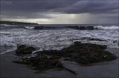 212 - July Clouds and Rain (North Light) Tags: seaweed beach rain weather clouds coast scotland caithness thurso pentlandfirth thursobay thursobeach