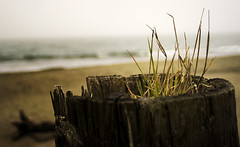 PACIFIC NORTHWEST 33 (Detective Steve) Tags: plants abandoned beach nature grass solitude neglected pacificnorthwest oceanshores natureycrap