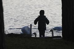 Lunch time (Pavel Vanik) Tags: czechrepublic bohemia nature bird swan feeding kid child water canon 7d sigma150600c