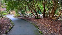 Walk in the Park ( Clyne ) 17th February 2017 - (John B Davies) Tags: garden clyne path pathway