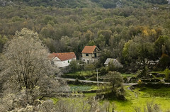 A6588MONTd (preacher43) Tags: njeguši cetinje montenegro sheep lovcen mountains farm