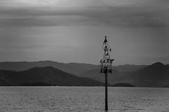 B&W Angra Bay (Rod.T28) Tags: canon1dsmarkiii canon70200mm28lii brazil angradosreis blackandwhite film sea bay