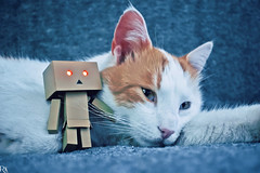 Danbo & cat @ danbo/данбо (Robert Krstevski) Tags: robertkrstevskiblogspotcom robertkrstevski photography photooftheday photograph photo photographer cat cats pet pets animal animals animallovers animalslove catsphotography catlovers catsedition gatos gato котка кошки кошка kotka животни животно danbo danboard danbomacedonia danbostory danboamazon danborou popular nikond3300 nikon cute