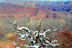 Grand Canyon 10 (Krasivaya Liza) Tags: grandcanyon grand canyon national park canyons nature natural wonder az arizona holiday christmas 2016 snowy winter cliffs cliffside edgeofcliff